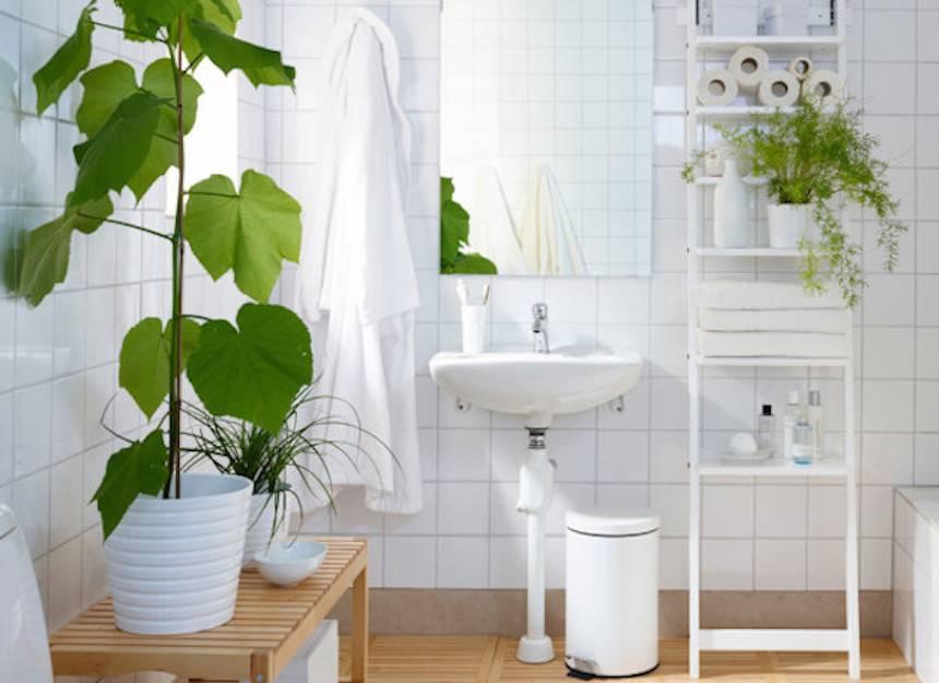 shower-plants_2-jpg-860x0_q70_crop-scale