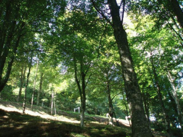 16055 - Monte de Hayas