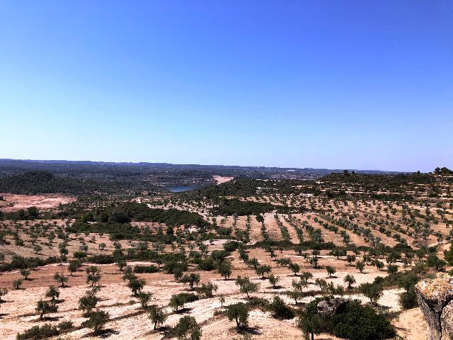 Imagen 1 Inmueble 229483 - Solar Rústico en venta en Castelldans / Finca rústica en  Casteilldans