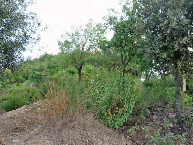 178388 - Zona: La Floresta