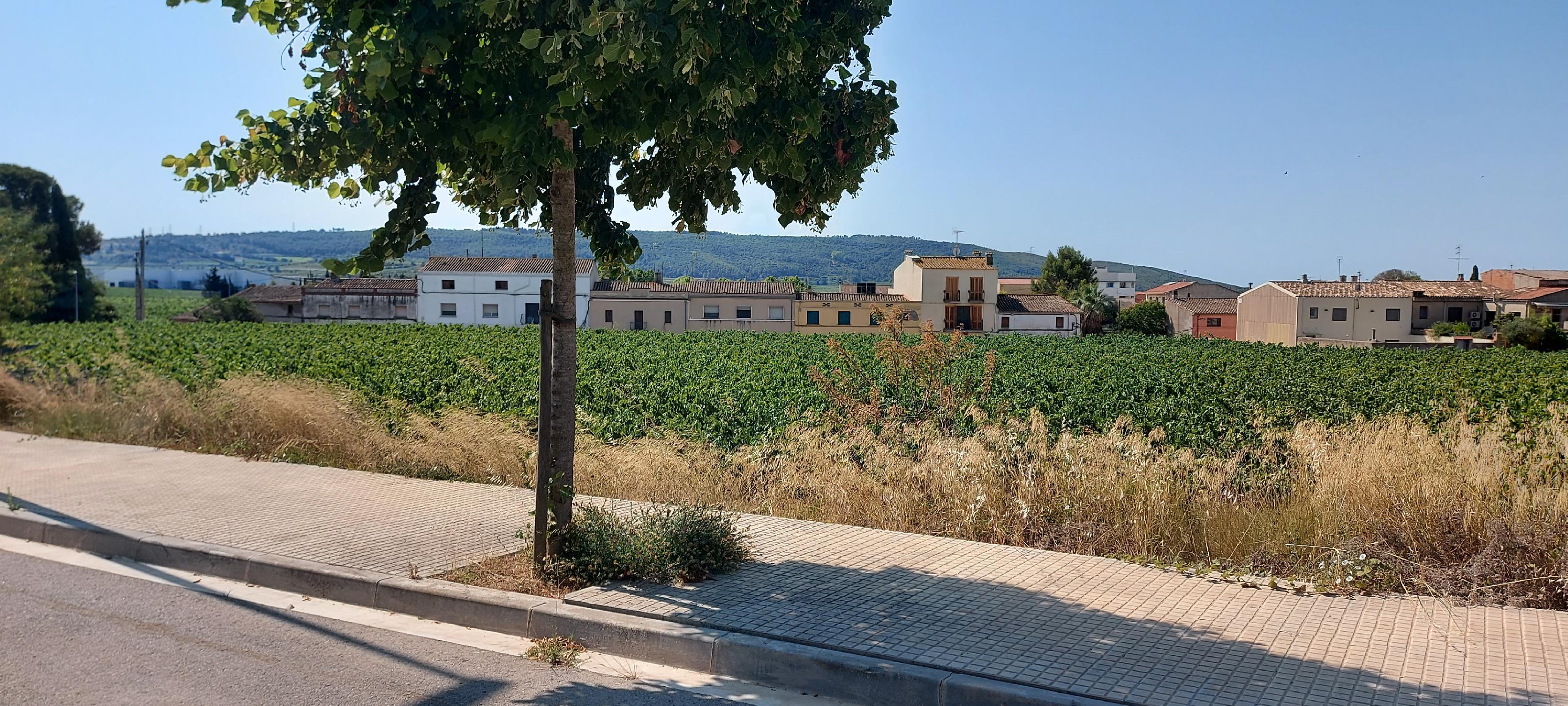 Imagen 4 Solar Urbano en venta en Sant Cugat Sesgarrigues / Sant Cugat Sesgarrigues