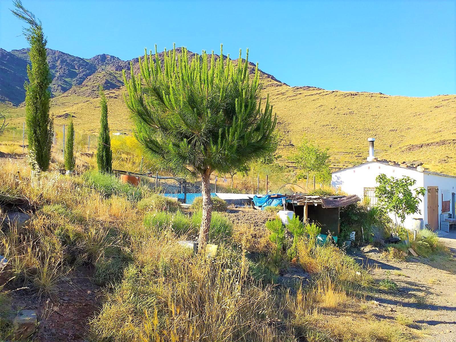 229055 - Paraje el Campillo, Velefique